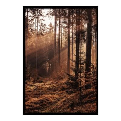 Obraz FOREST 50x70 cm