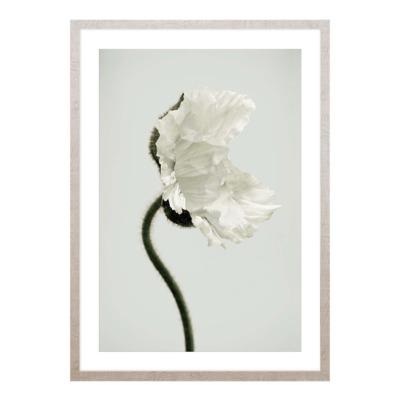 Obraz NATURE IV 50x70 cm