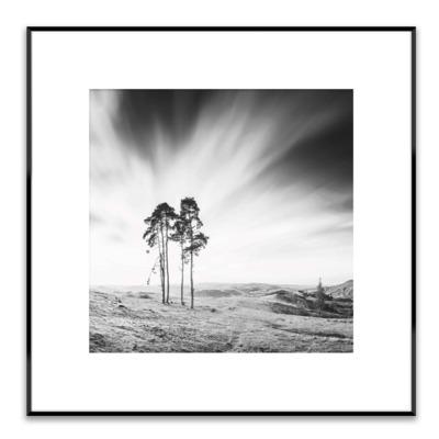 Obraz ARTBOX TREES 50x50 cm
