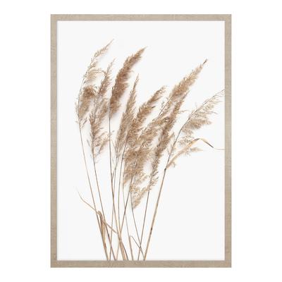 Obraz PAMPAS GRASS I 53x73 cm